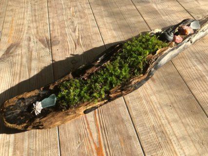 流木に苔を
