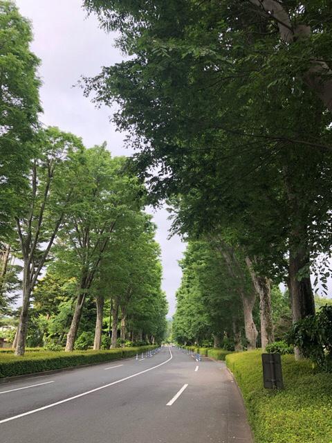 朝の御陵への参道